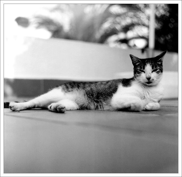Lucy ganz entspannt...