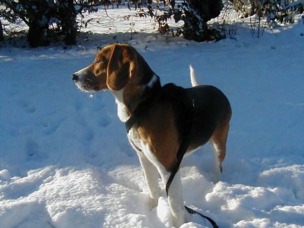 Lucy im Schnee (1)