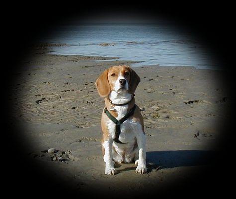 Lucy in Hooksiel am Strand