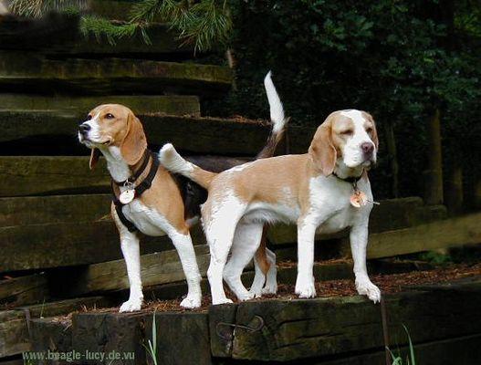 Lucy und Wilma