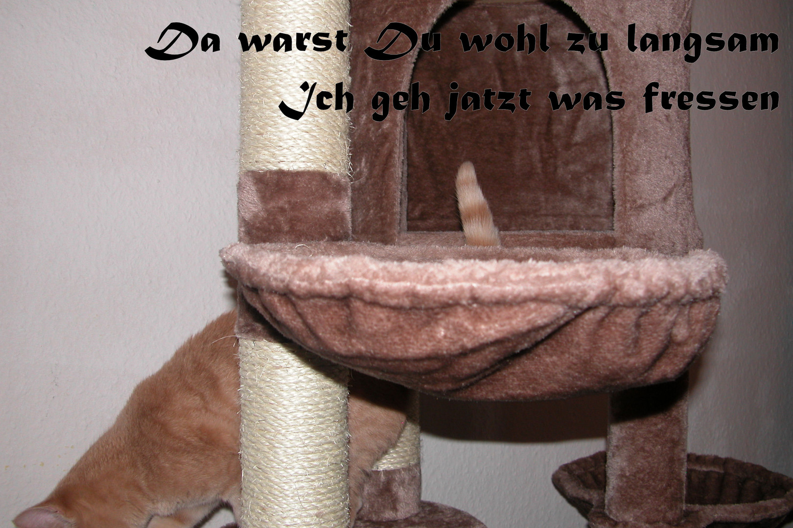 Ludwig der Umtriebige