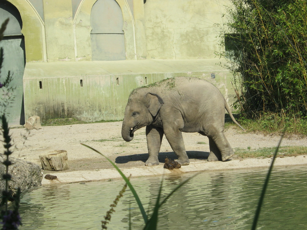 Ludwig im Zoo Hellabrunn