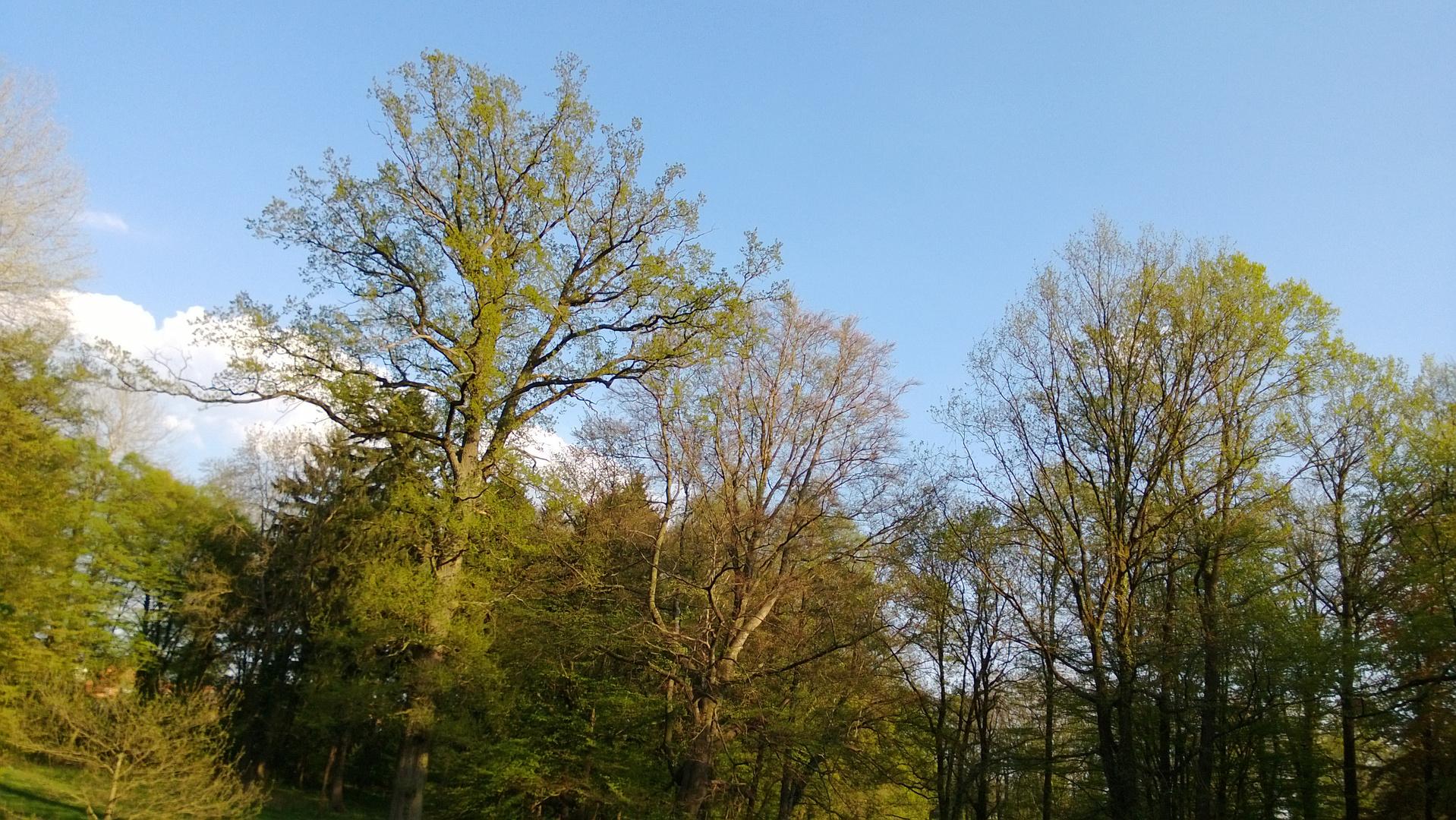 Ludwigsluster Schlosspark.