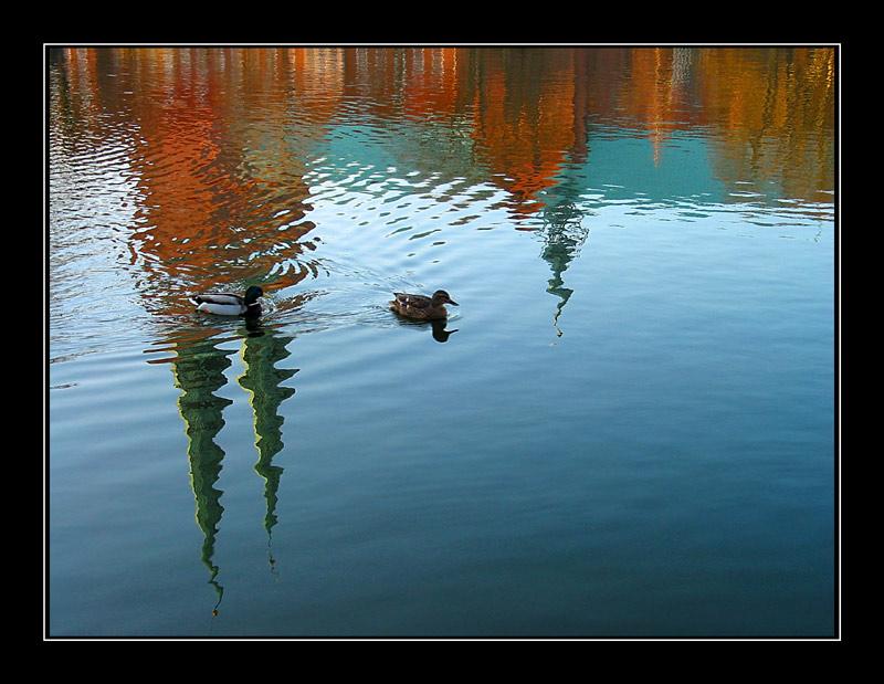 Lübeck -  Domspiegelung mit Ente