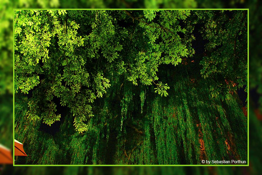 Lüneburg ist grün