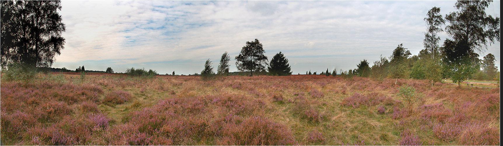 Lüneburger Heide (1)
