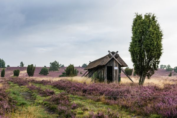 Lüneburger Heide III