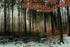 Lueur dans la forêt