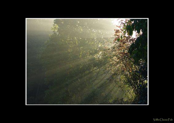 Lueur d'automne (1)