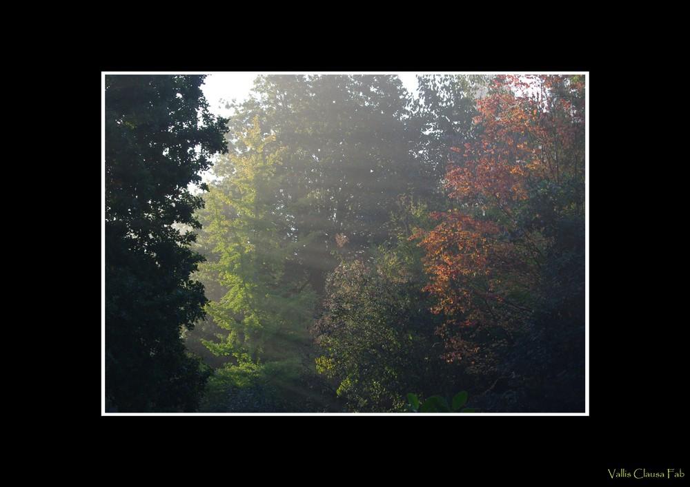 Lueur d'automne (2)