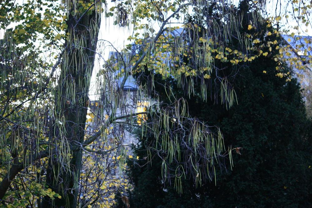 Lueurs dans les arbres.......