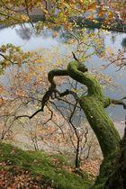 Luft-Baum