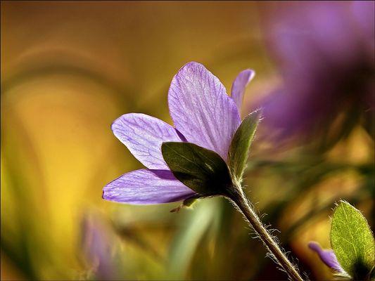 luftig leichte Frühlingslaune