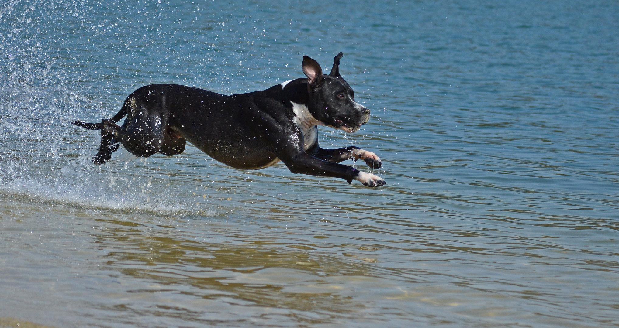 Luftkissenhund