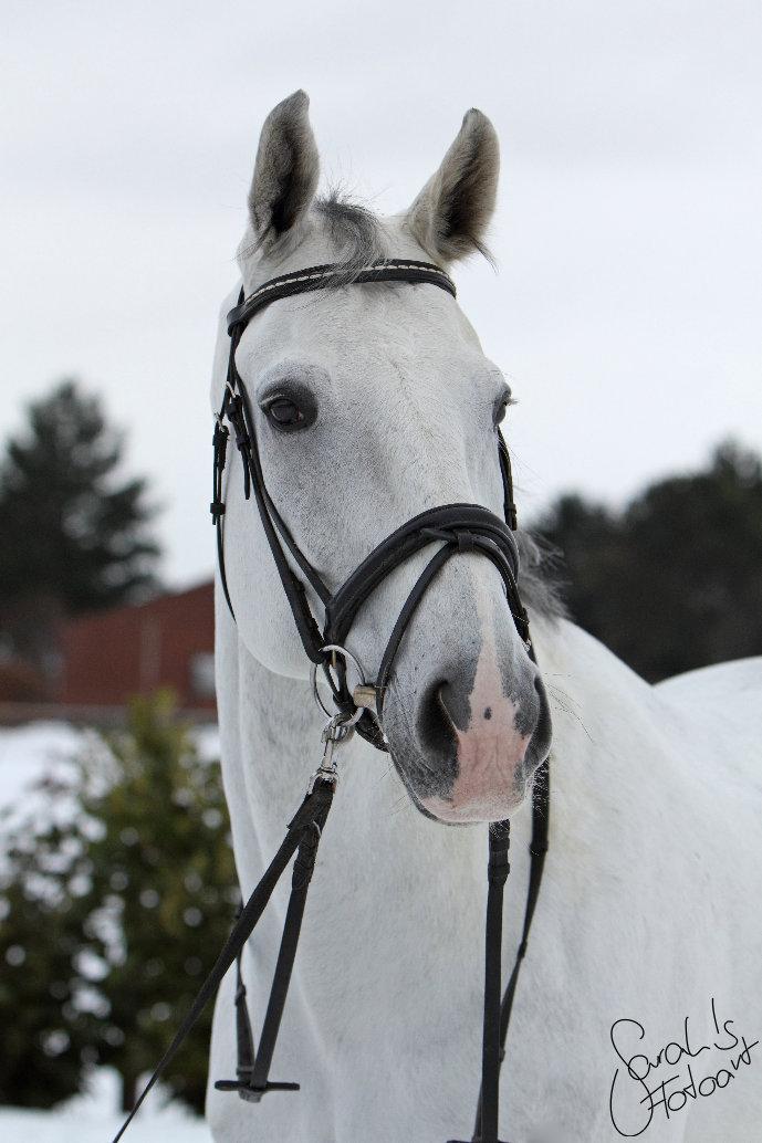 Lui, der weiße Riese II