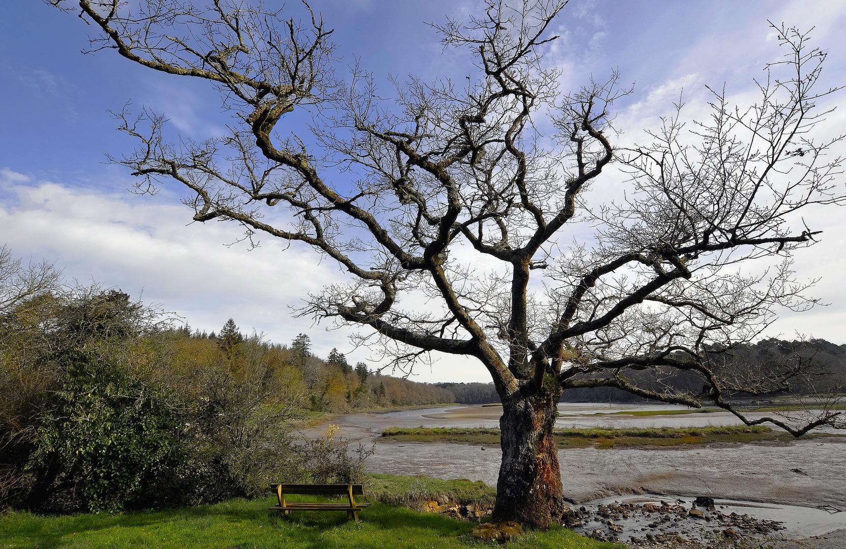 Lui, l'arbre