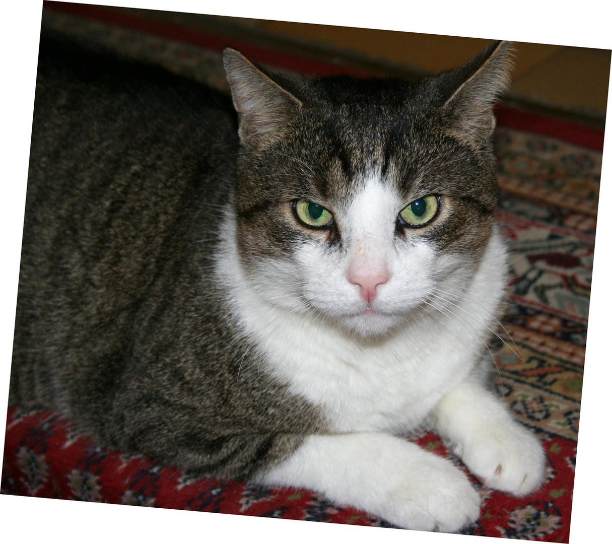 LUIGI, unsere Hauskatze