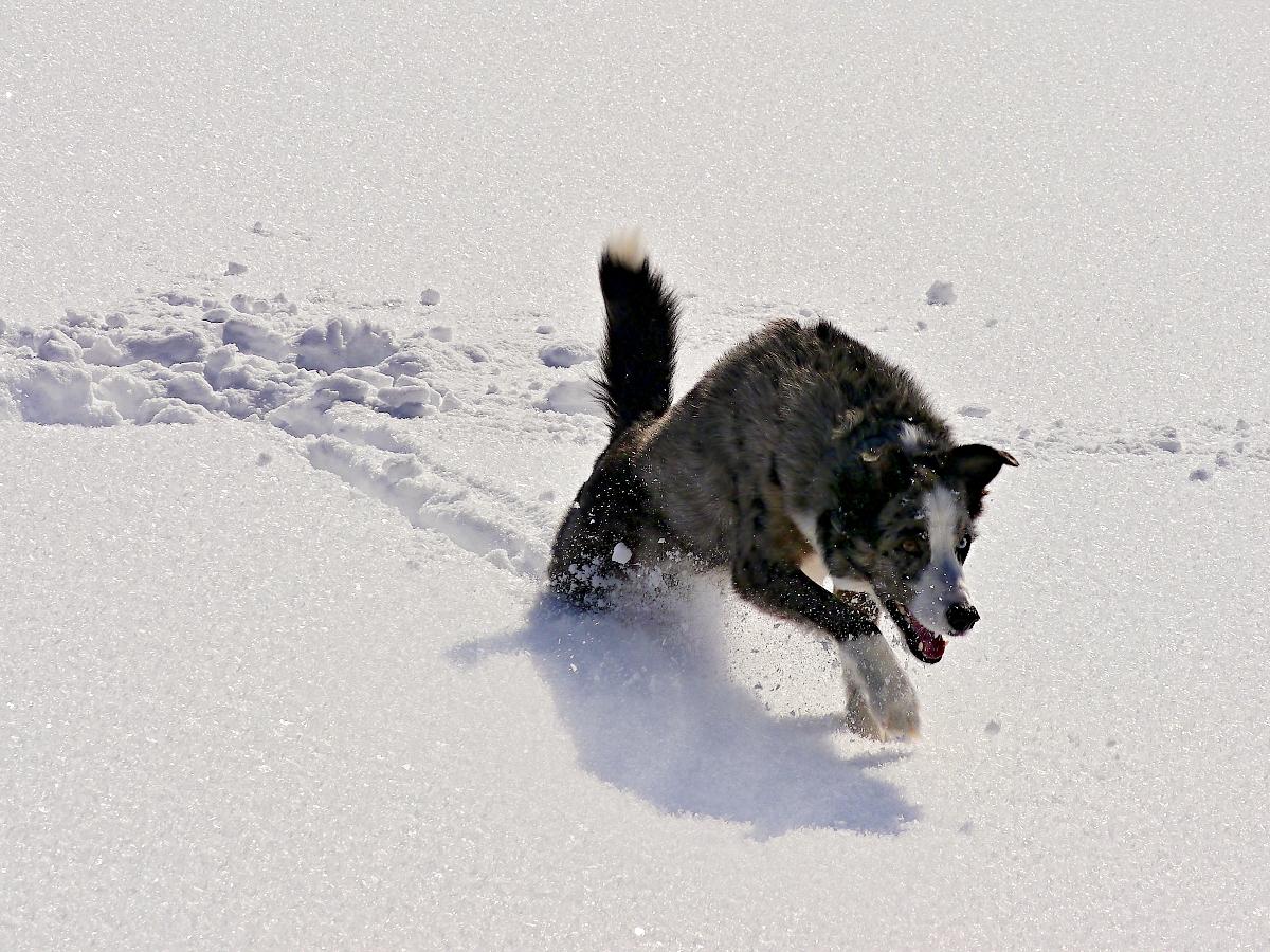 Luk im Schnee