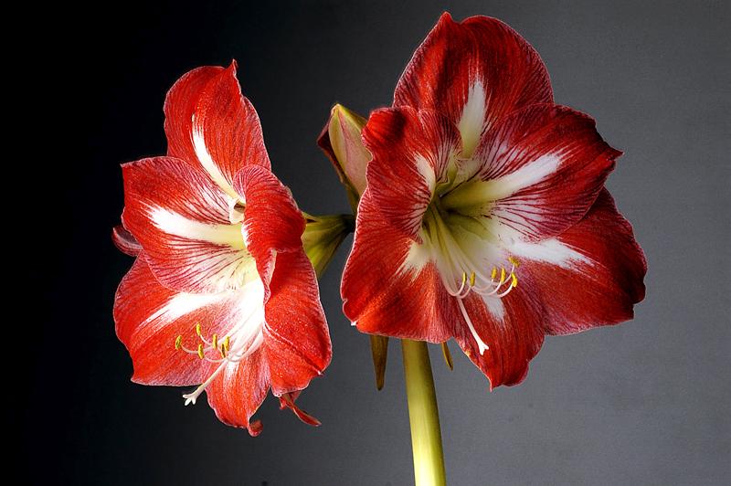 .....l'ultimo a fiorire.....