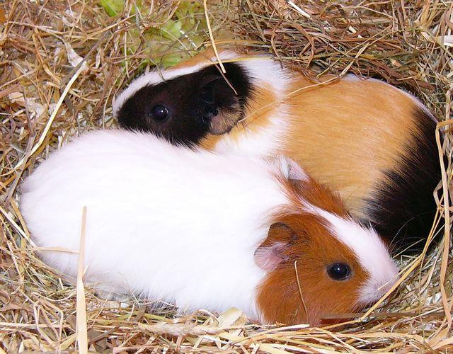 Lulu & Nina