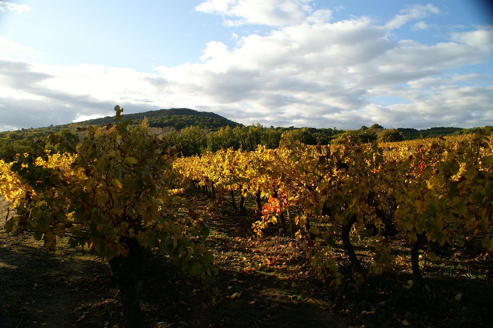 lumière d'automne en Languedoc Roussillon
