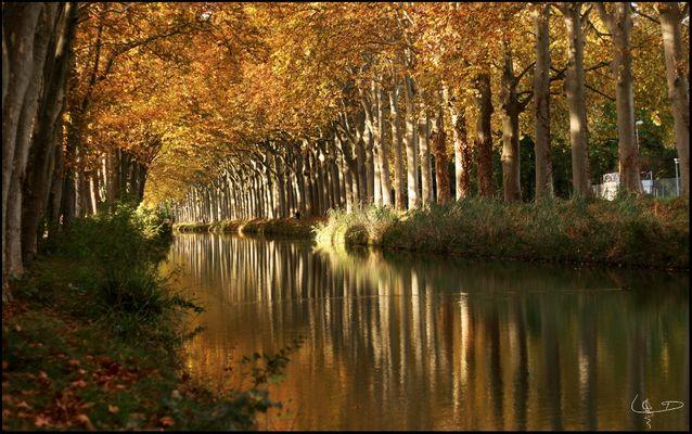 Lumière d'automne sur le canal du midi
