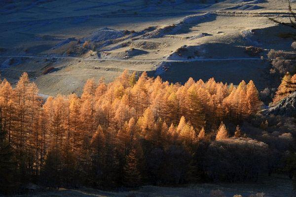 Lumière d'automne sur les mélèzes de Haute Ubaye