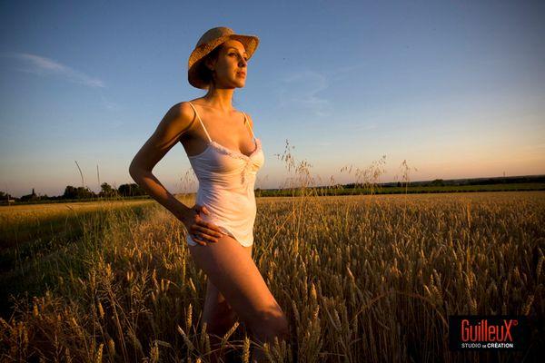 lumière de fin de soirée dans les champs de blé