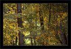 Lumière de Septembre en forêt de Compiegne