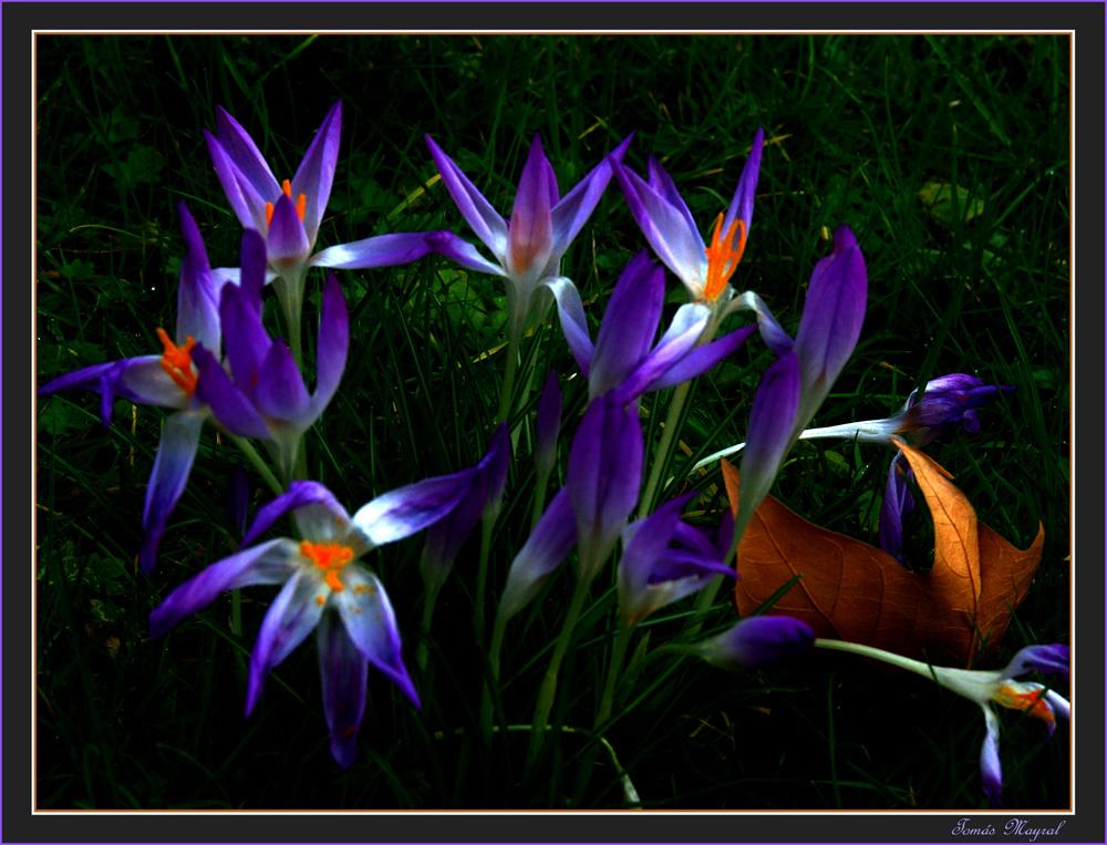 Lumière du Fleurs