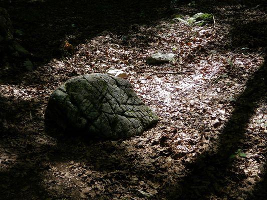 Lumière en forêt...