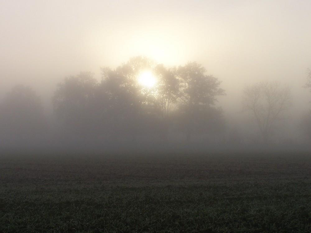 Lumière et brouillard