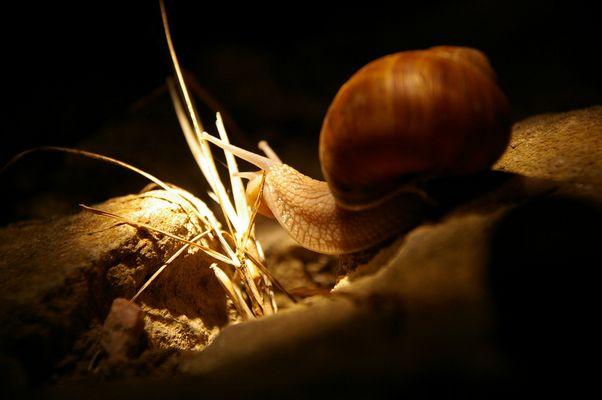 Lumière et Escargot