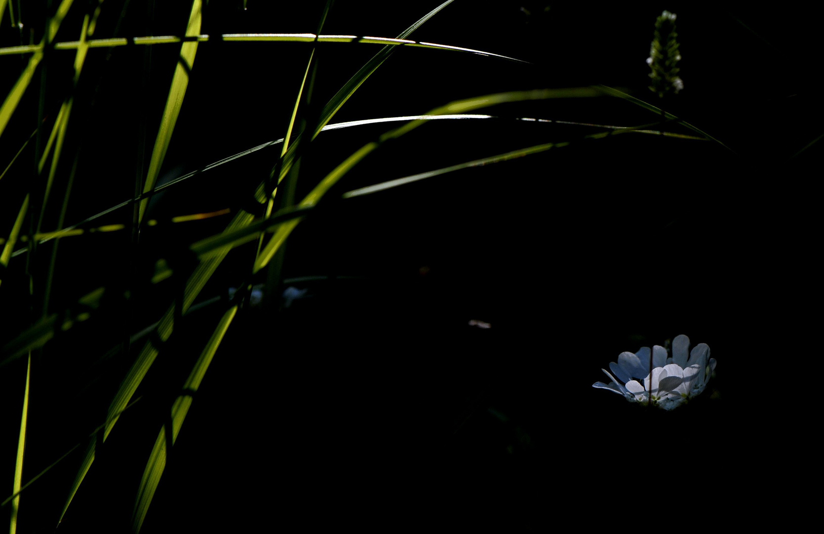 Lumière et obscurité