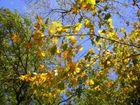 Lumieres d'automne dans les arbres 2