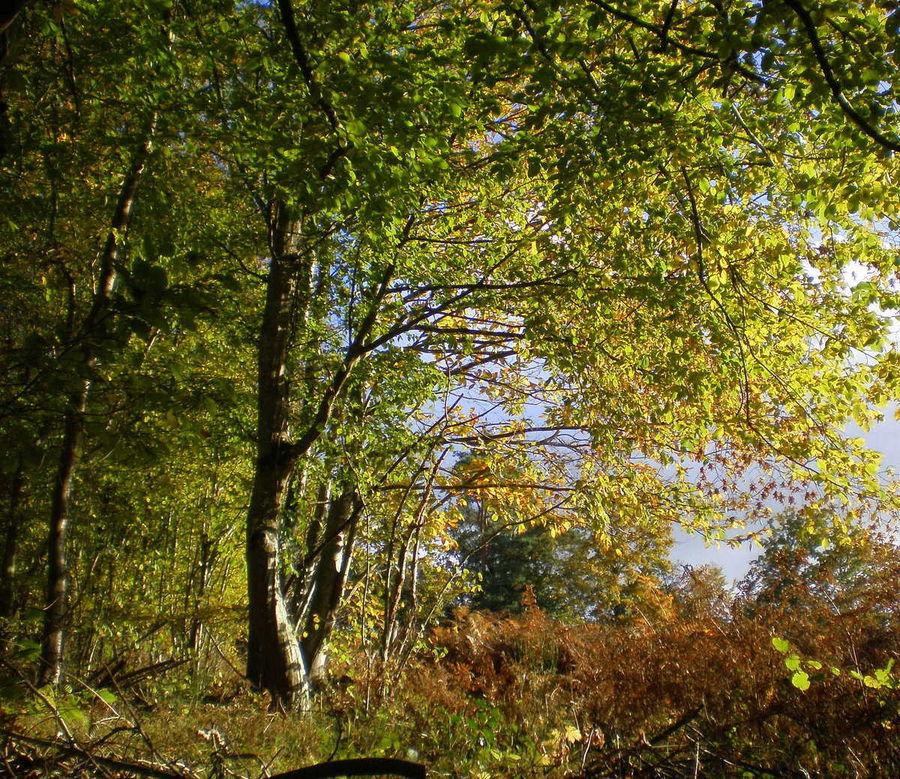 Lumieres d'automne dans les arbres 3