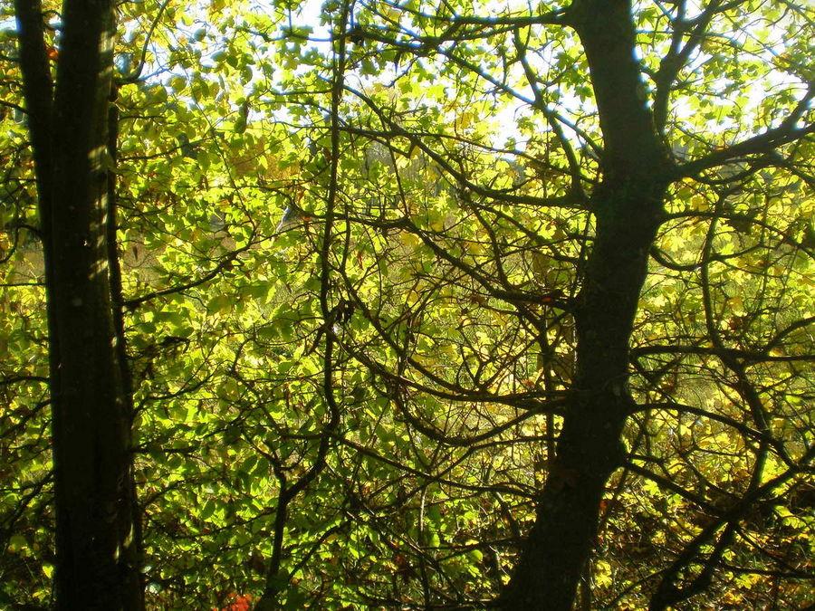 Lumieres d'automne dans les arbres