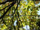 Lumieres d'automne dans les arbres 4