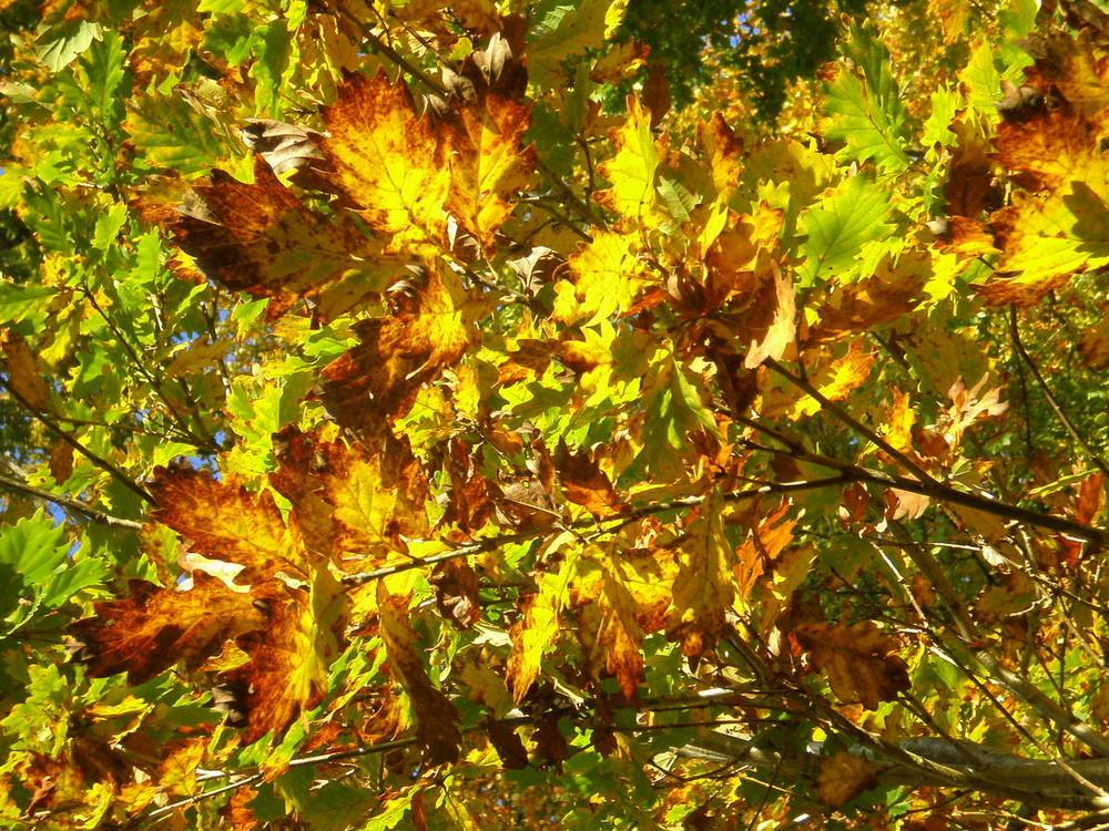 Lumieres d'automne dans les arbres 5