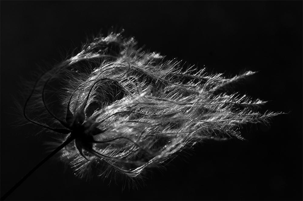 ...luminous filaments...
