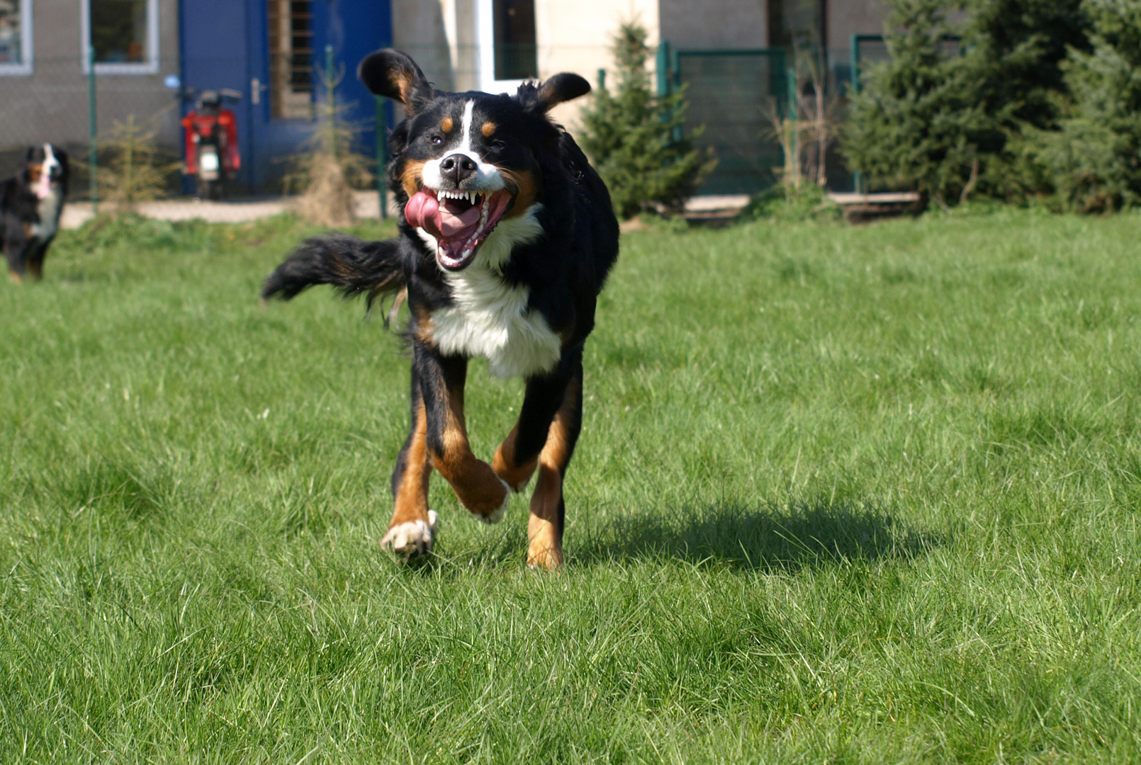 Luna am rennen