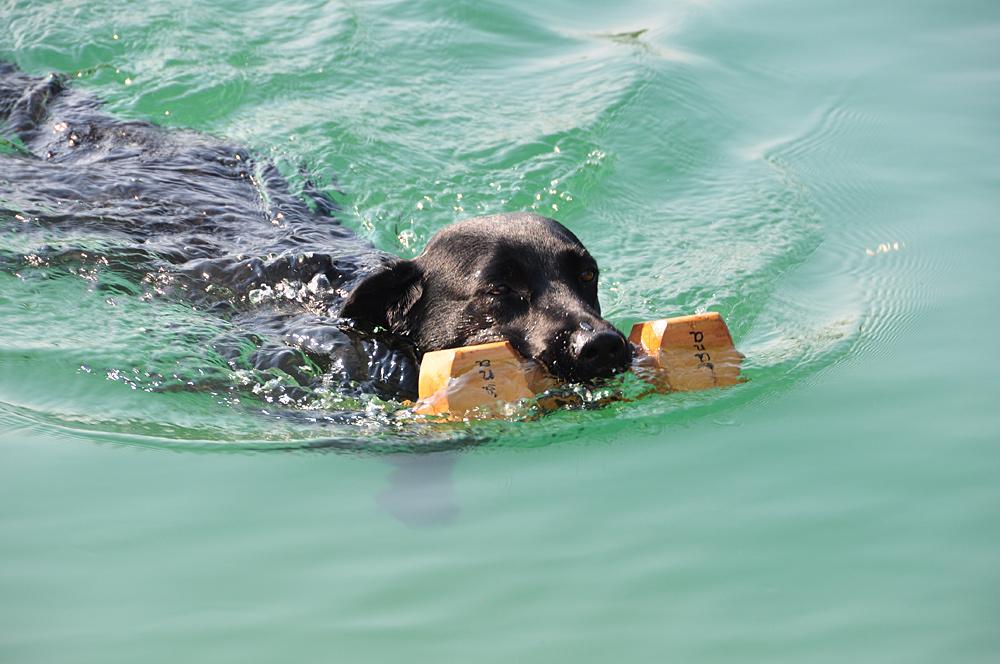 Luna bei der Wasser-Rettungs-Prüfung