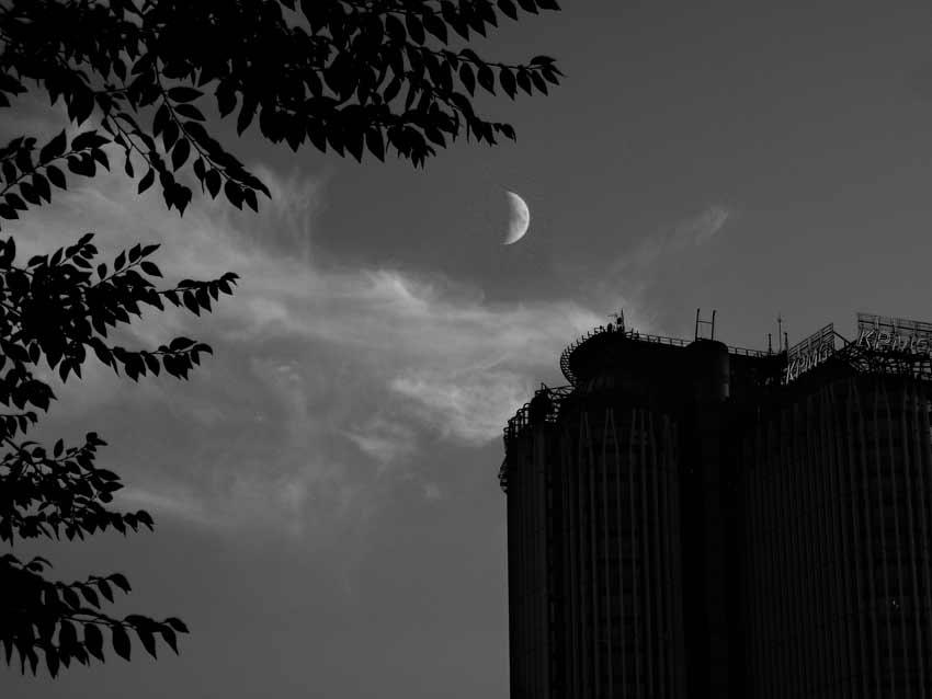 Luna di Zafferano.