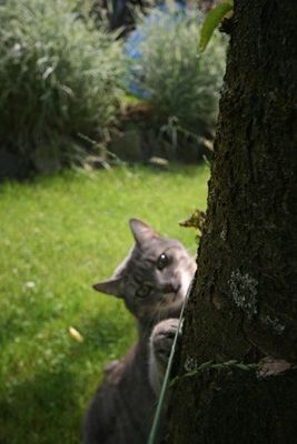 Luna im Garten