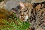 Luna liebt frisches Gras