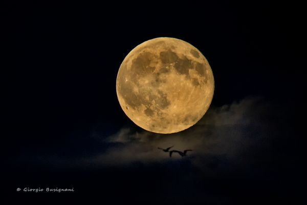 Luna piena - 31 luglio 2015