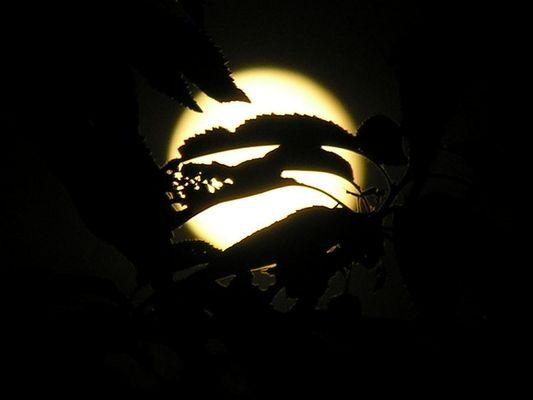 Lune en feuille
