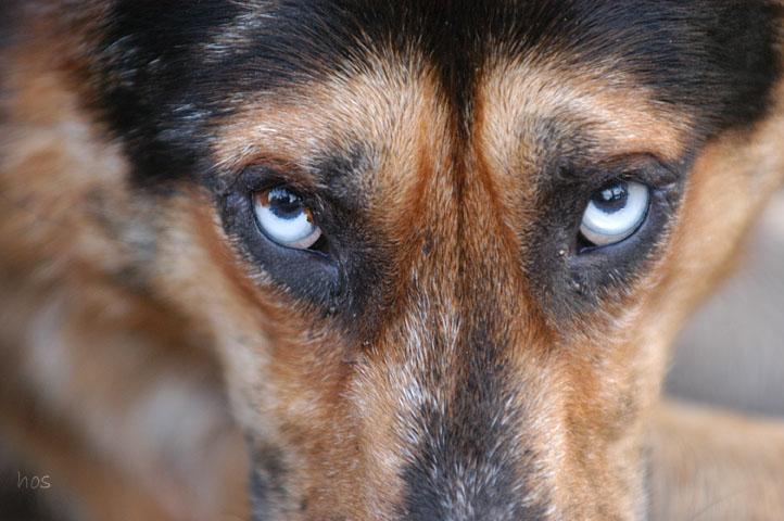 lups eyes