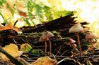 lustige Pilzfamilie