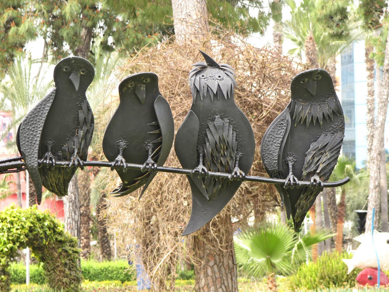 Lustige Vögel im Park von Alanya